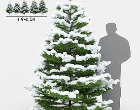 Fir under the snow 3D model