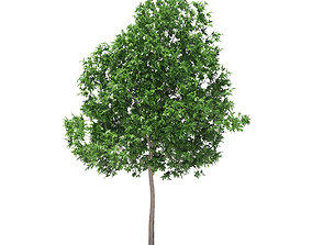 White Oak 5point7m 3D