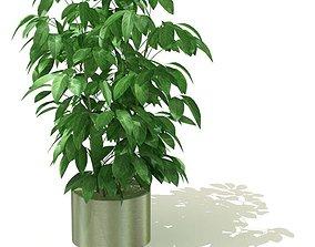 Green Leafed Pot Plant 3D model