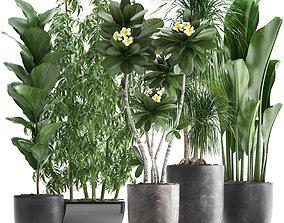 ficus Collection Exotic plants 3D