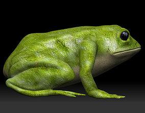 Green frog 3D asset