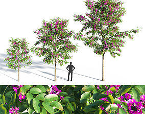 Purple Robe Locust - Robinia Pseudoacacia 3D model