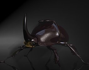 3D model Rhinoceros Beetle RIGGED