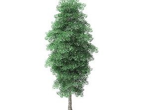 Green Ash Tree 3D Model 9m