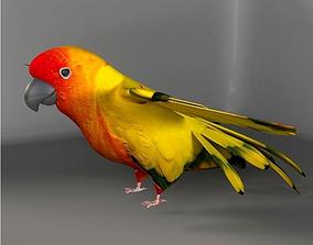 3D model low-poly Parrot A