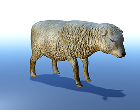 animated Sheep 3D Model