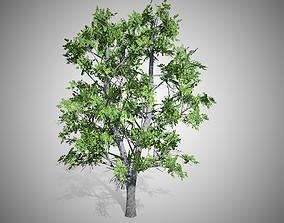 3D asset European Linden Tree