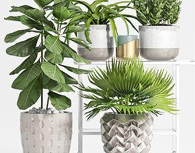 3D Decorative plant set-53