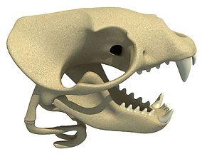 3D model Sea Lion Zalophus Skull