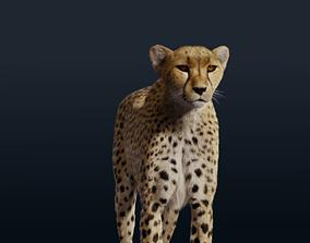 Cheetah Fur 3D