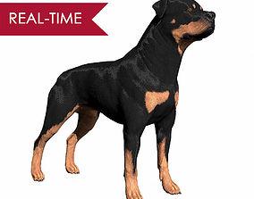 3D asset Rottweiler Real-Time