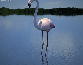Flamingo Phoenicopterus 3D model