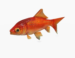 3D model animated Gold Fish