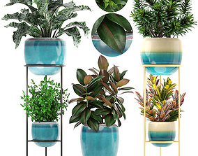 3D Collection plants tradescantia
