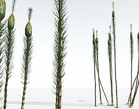 3D EVERYPlant Suckows Horsetail Tree 03 --16 Models--