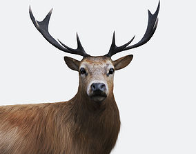 3D model The Forest Deer