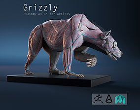 3D model Digital Grizzly bear anatomy Atlas for Artists 2