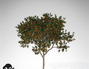 3D model XfrogPlants Sweet Orange Tree