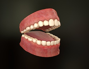 Realistic human Teeth - Mouth for character game-ready 2