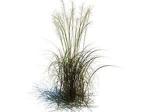 Brown Molinia Arundinacea Bush 3D