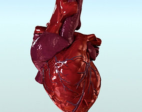 organ 3D Heart Anatomy