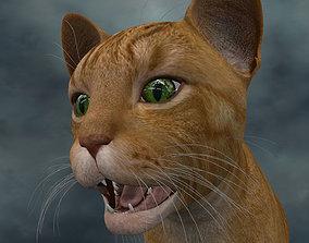 3D model UVWC-007 Cat Textures Only