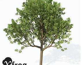 3D XfrogPlants Downy Oak