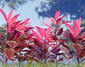 3D model Plant - Cordyline