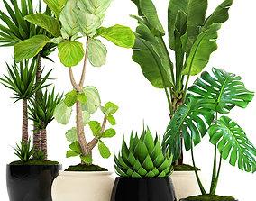 Collection plants 3D model set