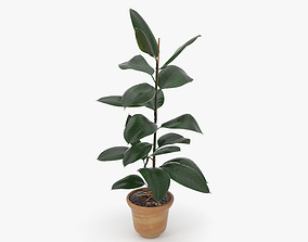 figs 3D model Ficus
