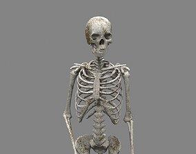 3D asset rigged Skeleton