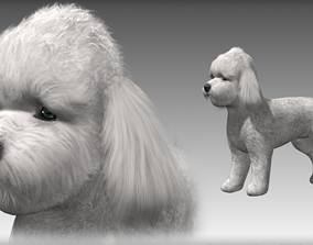 3D rigged Poodle Small Dog