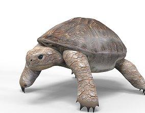 3D asset Tortoise