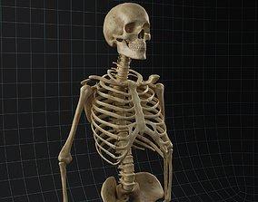 3D Anatomy skeleton 02