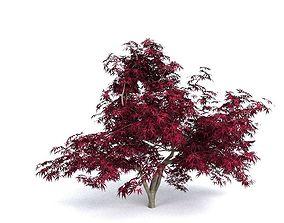 bark Red Japanese Maple 3D model