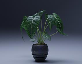 Alocasia 3D Pot plant