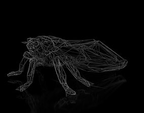 Cicada Wireframe 3D asset