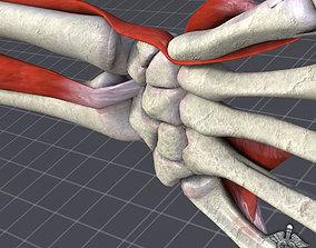 3D Human Wrist Bone Structure
