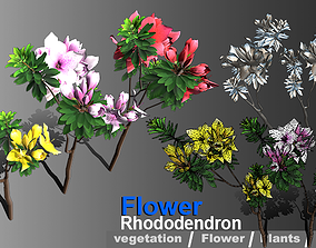 Flower Rhododendron 3D model