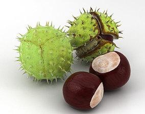 Chestnut 3D model