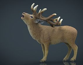 3D model Realistic Deer