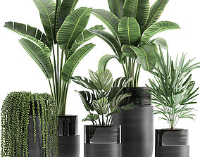 Houseplants in a black pot for the interior 709 3D model