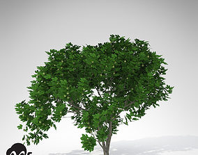 3D XfrogPlants Fig Tree