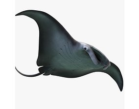 Manta Birostris Static 3D model VR / AR ready