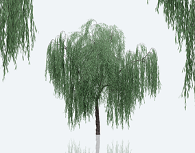3D PBR Weeping Willow