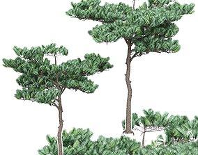 Pine 4 3D model