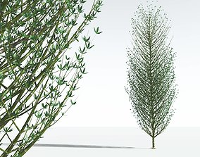EVERYPlant Twisted Horsetail Tree 10 --12 Models-- 3D