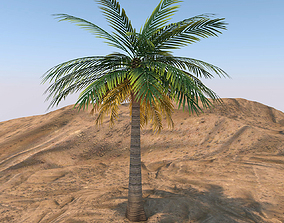 3D Queen Palm Tree