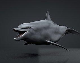 Bottlenose Dolphin 3D asset