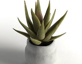 nature faux aloe plant 3D model